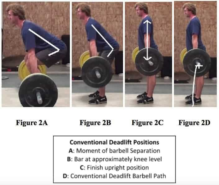 Conventional Deadlift Downward Phase