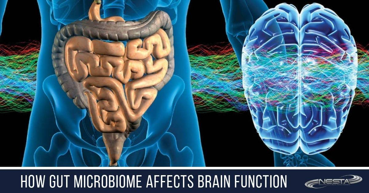 relationship between the gut microbiome and brain function