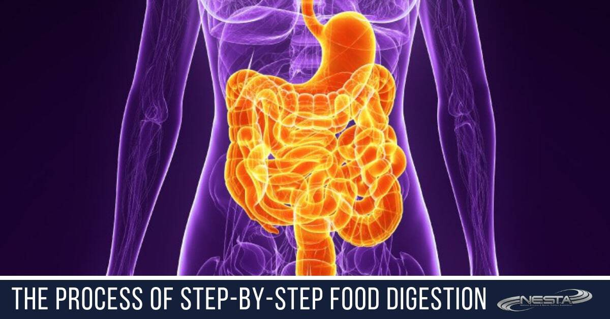 The Process of Step-by-Step Food Digestion